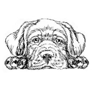 Hund Labrador - StickZebra