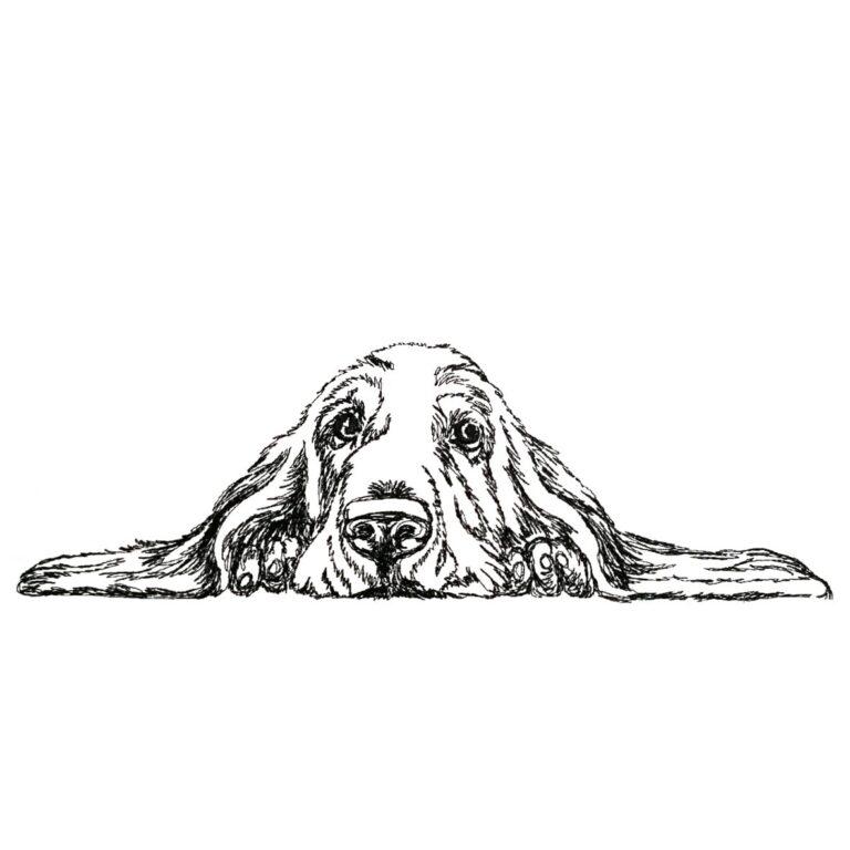 Hund Basset - StickZebra